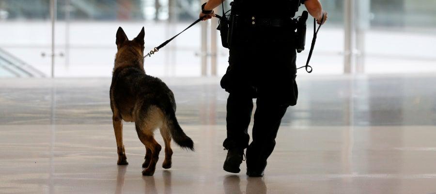 Un perro policía de la brigada K-9, como Kina