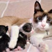 Gata con gatitos