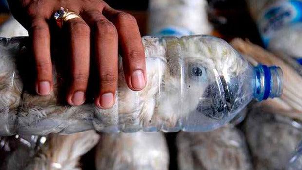 Naturaleza: El drama que se esconde tras el tráfico ilegal de especies