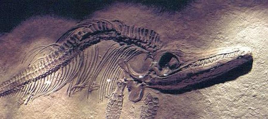 Restos de un pterosaurio