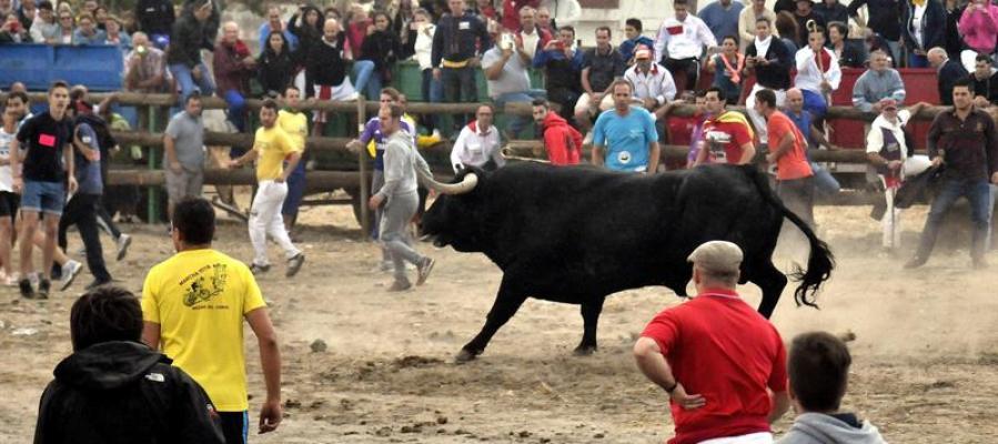 Fiestas del Toro de la Vega
