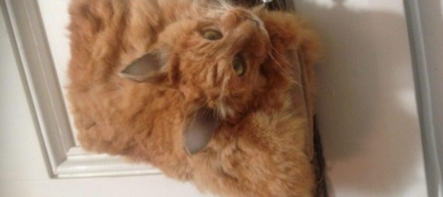 Bolso de un gato disecado y puesto a la venta