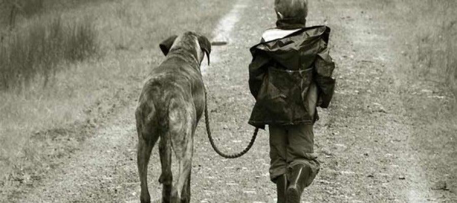 Niño paseando por un perro