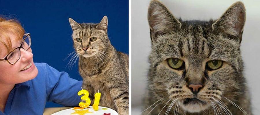 El gato Nutmeg cumple 31 años