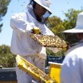 En Abadía Retuerta también hacen miel.