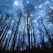 Instantánea de un bosque durante la noche