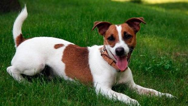 Naturaleza: ¿Cómo ayudan los perros a detectar enfermedades?