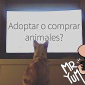 Yum More | ¿Adoptar o comprar animales? | Mr.Yum Vlogs