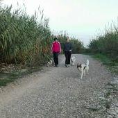 Los propietarios que paseen a los perros sin collar serán sancionados.