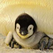Día de Concienciación por los Pingüinos