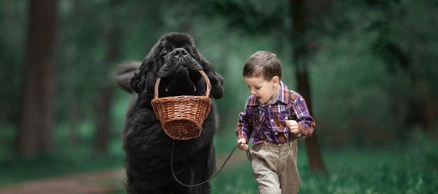 Imagen de la sería fotográfica 'Niños pequeños y sus perros grandes'