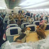 Los 80 halcones del príncipe saudí durante el vuelo