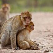 Grupo de macacos. / APP-Primadomus