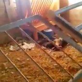 Imagen del estado de la granja que encontraron los Agentes Rurales