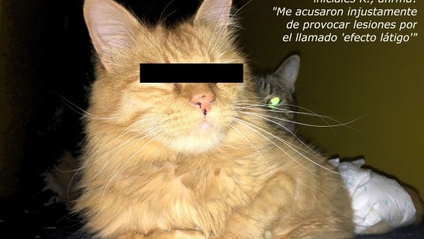 Rubi, el gato amputado por Carlos Rodríguez