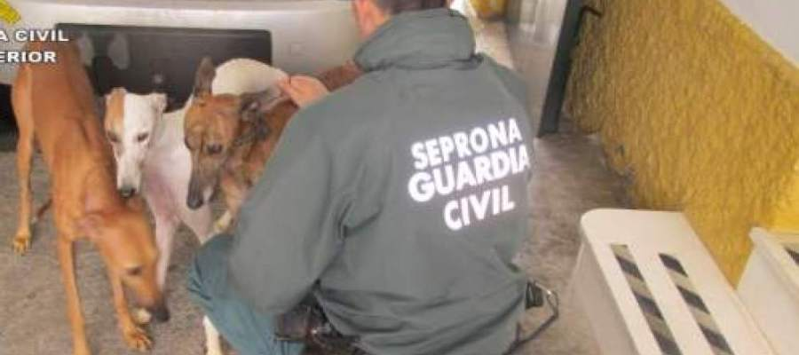 Seis meses de cárcel a un hombre por cortar los rabos y las orejas de diez perros sin sedarlos