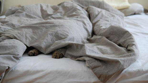 El dilema: ¿Es necesario hacer la cama todos los días en estos días de cuarentena?