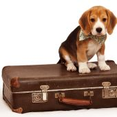 El Brexit Pet que generará dificultades para viajar a miles de perros y gatos