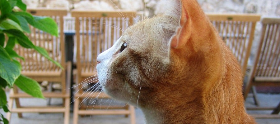 Los productos químicos que están en los muebles y la electrónica pueden afectar negativamente a la salud de los gatos de interior