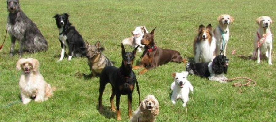 La localidad de Crevillent ha impulsado la creación de un registro de ADN canino para luchar contra los excrementos en la vía pública.