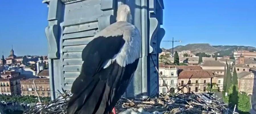 Las cigüeñas de Alcalá de Henares