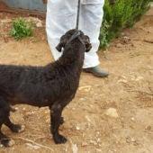 Rescatan a una veintena de perros desnutridos en Sevilla