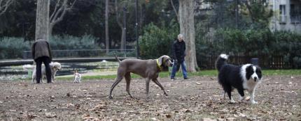 Enquesta gossos parcs públics