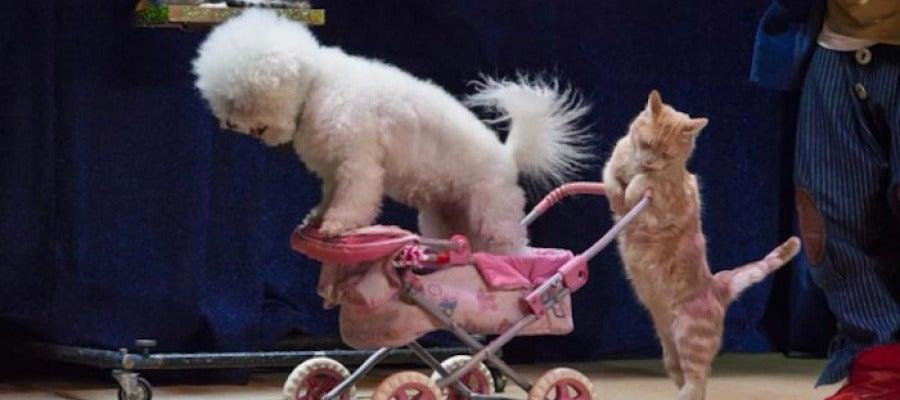 Dos de los animales del circo en uno de los espectáculos