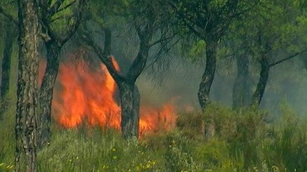 El incendio declarado en el paraje 'La Peñueña' de Moguer
