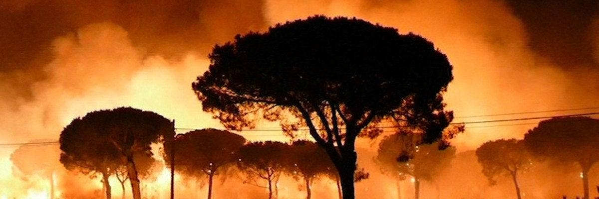 El incendio declarado en el paraje La Peñuela de Moguer (Huelva)