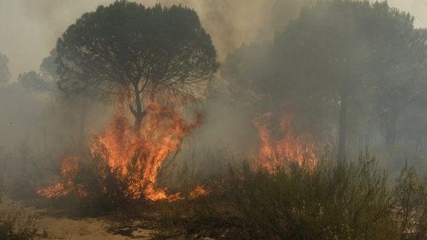 """El consejero de Medio Ambiente andaluz: """"No se va a recalificar ni un solo metro cuadrado que haya sido pasto de las llamas"""""""
