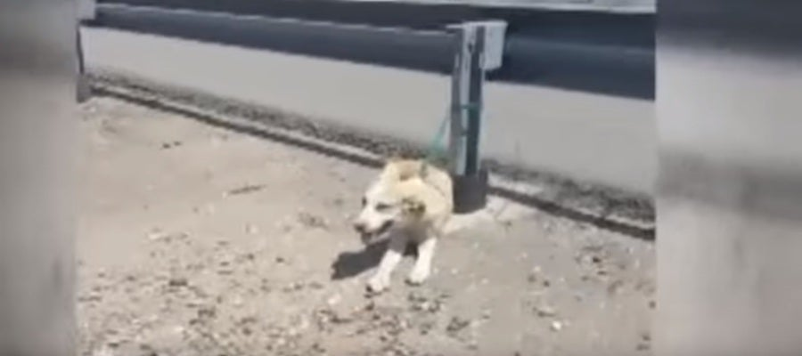 Una captura del vídeo de la perrita abandonada en Córdoba.