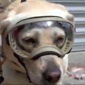 Frida, la perra rescatista que se ha convertido en la heroína de México tras el terremoto