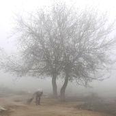 El árbol de la niebla (11-11-2017)