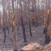 ¿Los incendios forestales ponen en peligro a la vida marina?