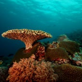 Parque marino del Arrecife de Tubbataha