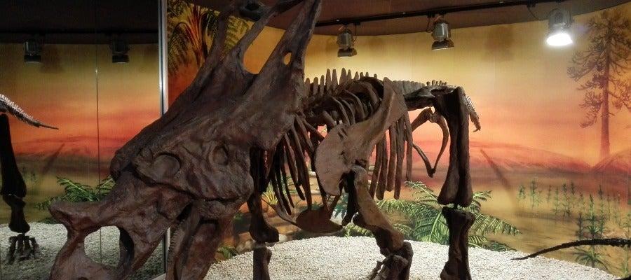 Una de las piezas expuestas en el Museo Paleontológico de Elche