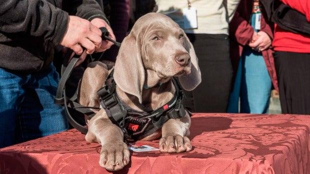 Un museo de Boston contrata a un cachorro de perro para cuidar sus obras de arte