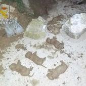 Investigadas tres personas por sepultar vivos a nueve cachorros en Murcia