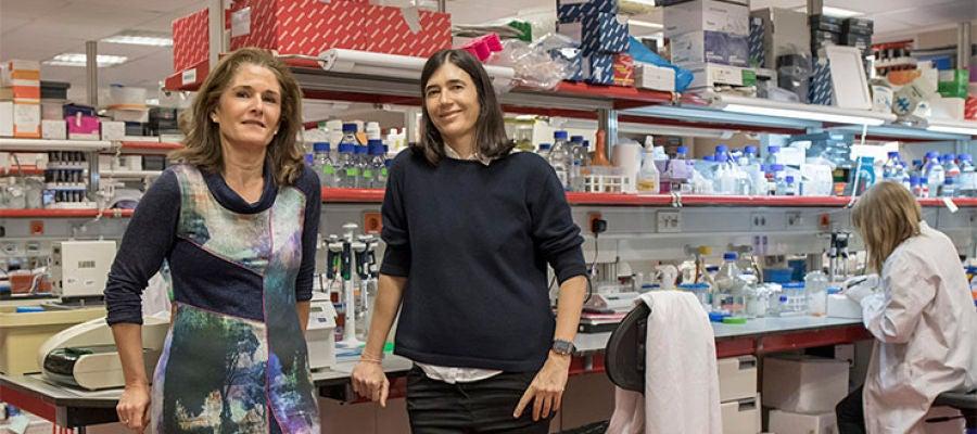 Investigadores del CNIO logran curar la fibrosis pulmonar en ratones con una terapia génica