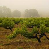 La lluvia está beneficiando a los cultivos leñosos y a los pastos