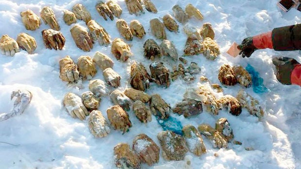Manel Loureiro | Aparecen 54 manos humanas cortadas en Siberia
