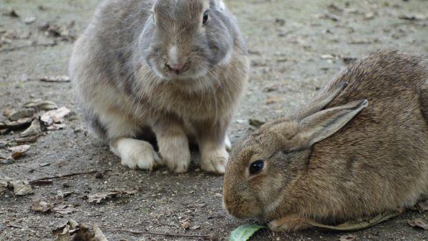 Los veterinarios alertan del peligro que provocan los activistas que asaltan las granjas