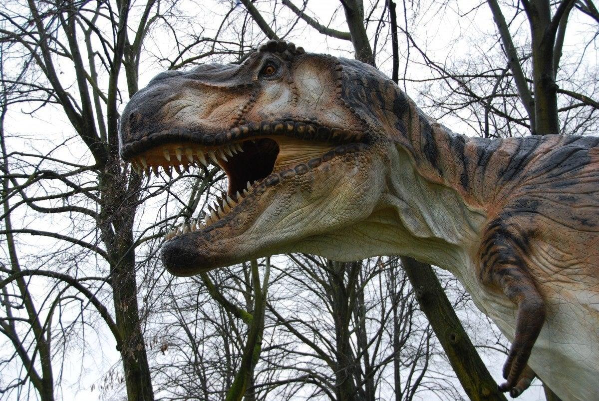 Mesa de Redacción: Tiranosaurios que existieron en la tierra