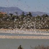 Las salinas del Pinet del Parque Natural de las Salinas de Santa Pola
