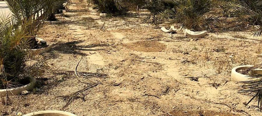 Estado del Parque de Palmeras de las Niñas y los Niños de Elche