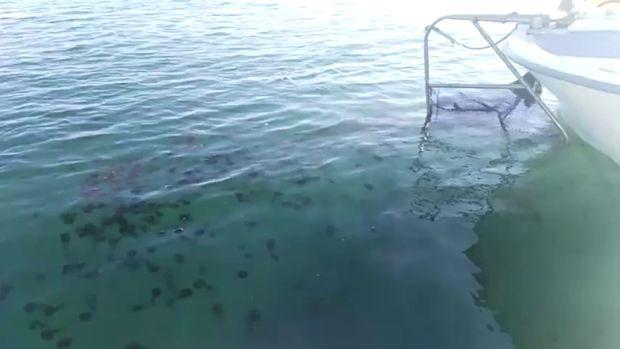 """""""Podemos saber por las condiciones del invierno cómo van a aparecer las medusas en verano"""""""
