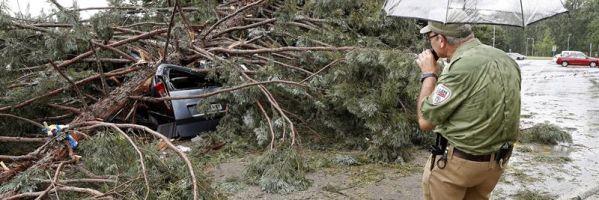 Árbol caído en el campus de la Universidad de Navarra