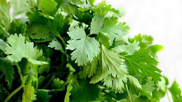 Si el cilantro te sabe a jabón, la culpa la tienen tus genes