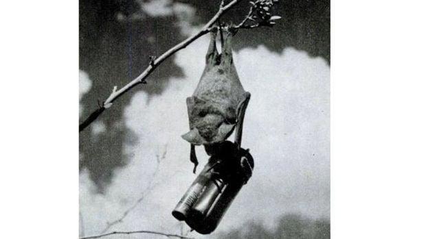 Juicio a la historia: Animales bomba